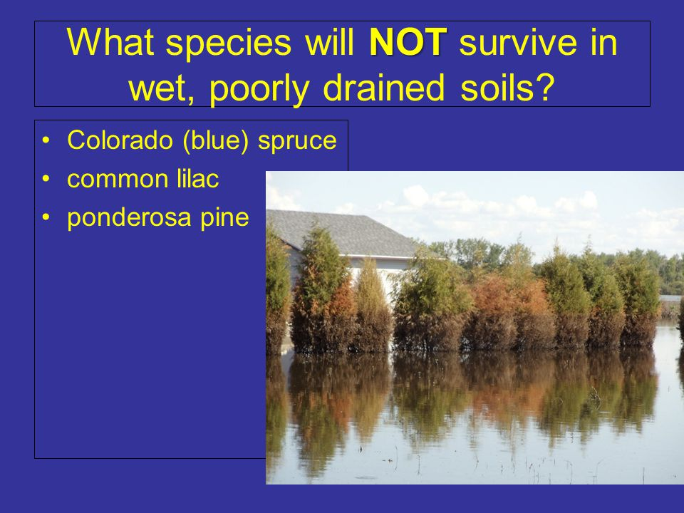 What species will NOT survive in wet, poorly drained soils