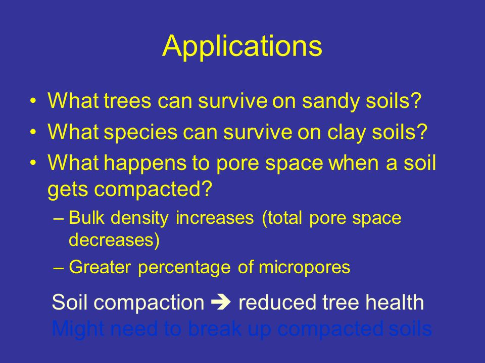 Applications What trees can survive on sandy soils
