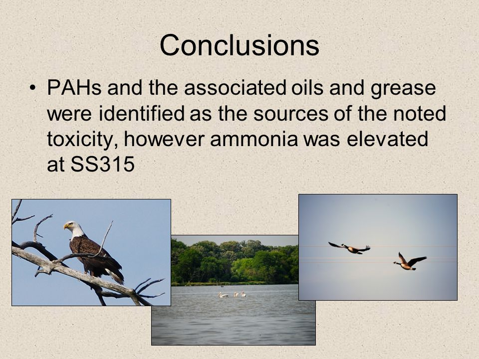 Conclusions PAHs and the associated oils and grease were identified as the sources of the noted toxicity, however ammonia was elevated at SS315.
