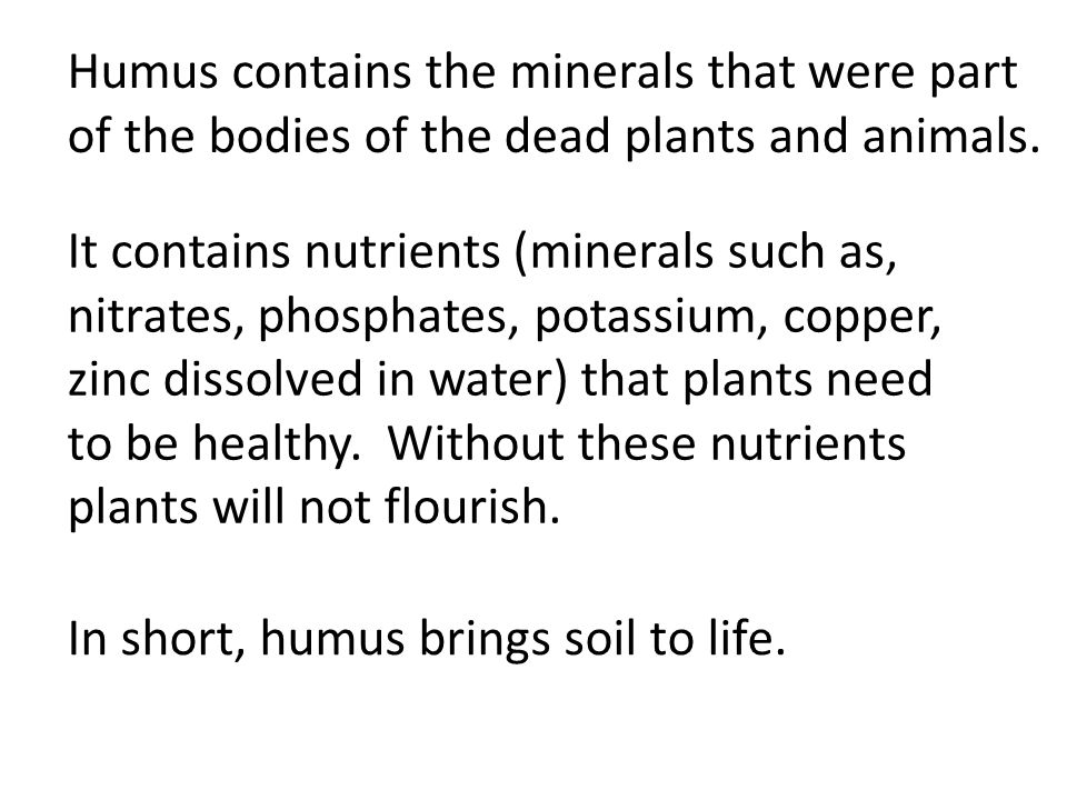 Humus contains the minerals that were part of the bodies of the dead plants and animals.