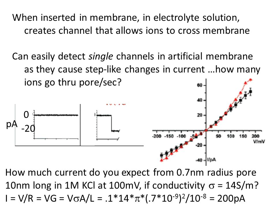 When inserted in membrane, in electrolyte solution,