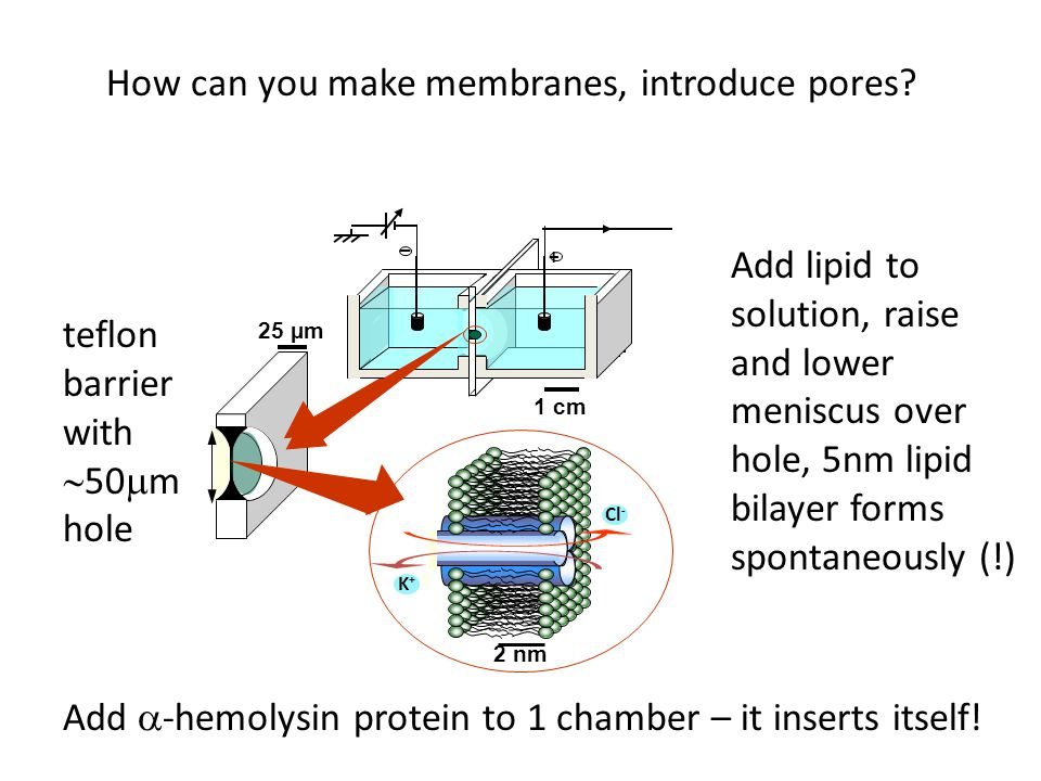 How can you make membranes, introduce pores