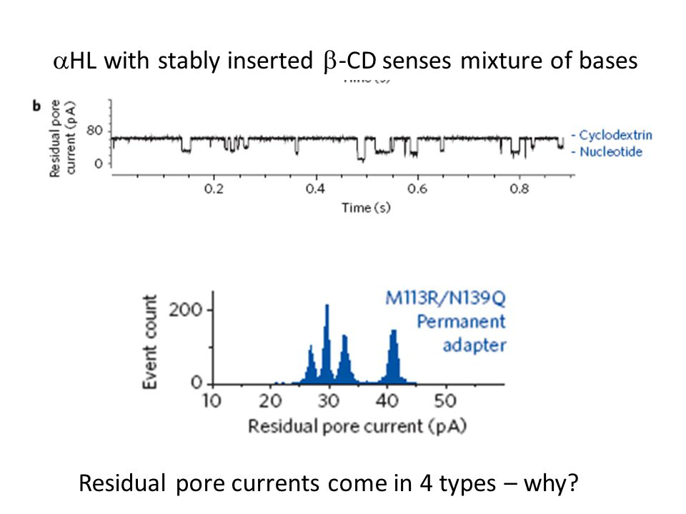 aHL with stably inserted b-CD senses mixture of bases