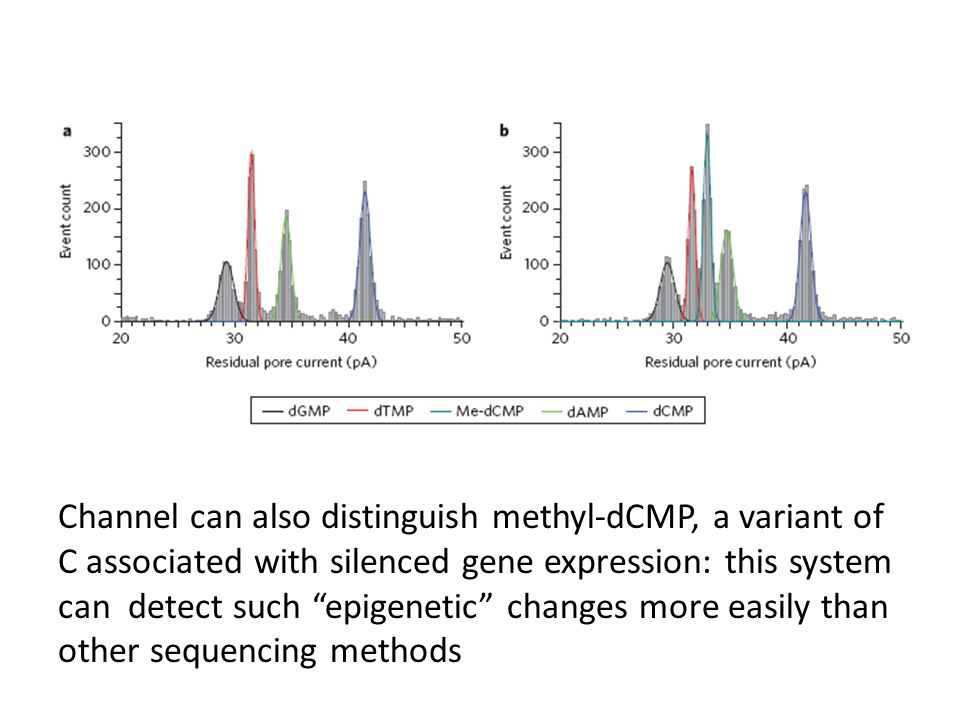 Channel can also distinguish methyl-dCMP, a variant of