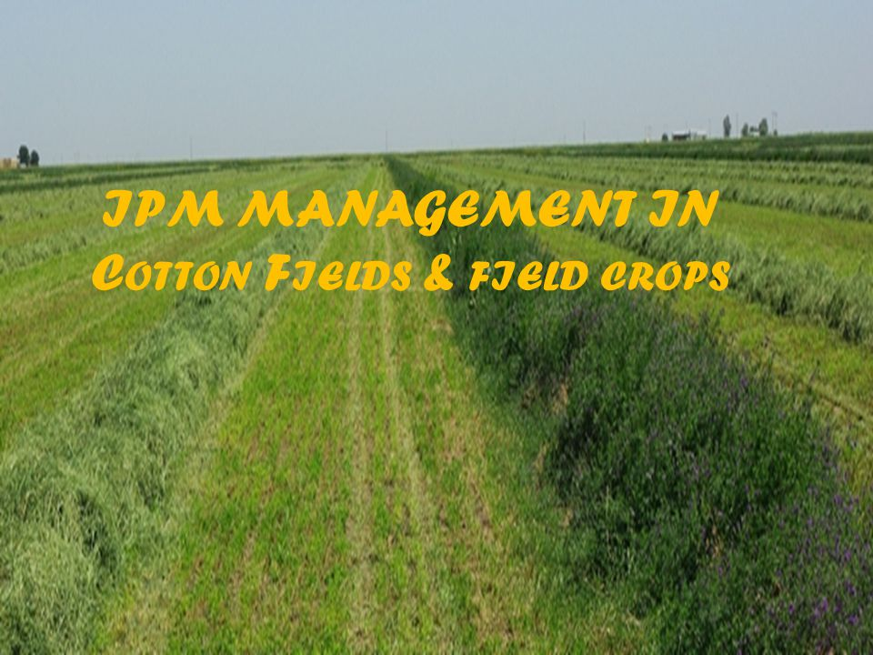IPM MANAGEMENT IN Cotton Fields & field crops