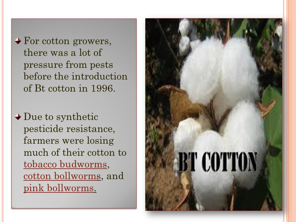 For cotton growers, there was a lot of pressure from pests before the introduction of Bt cotton in 1996.