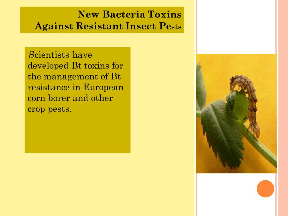 Against Resistant Insect Pests