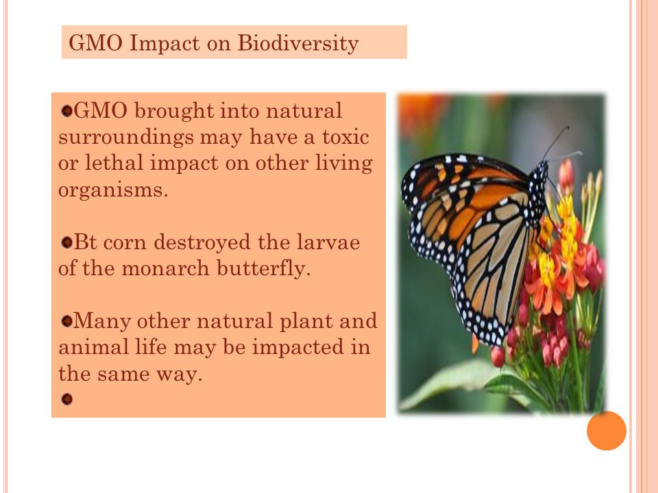 GMO Impact on Biodiversity