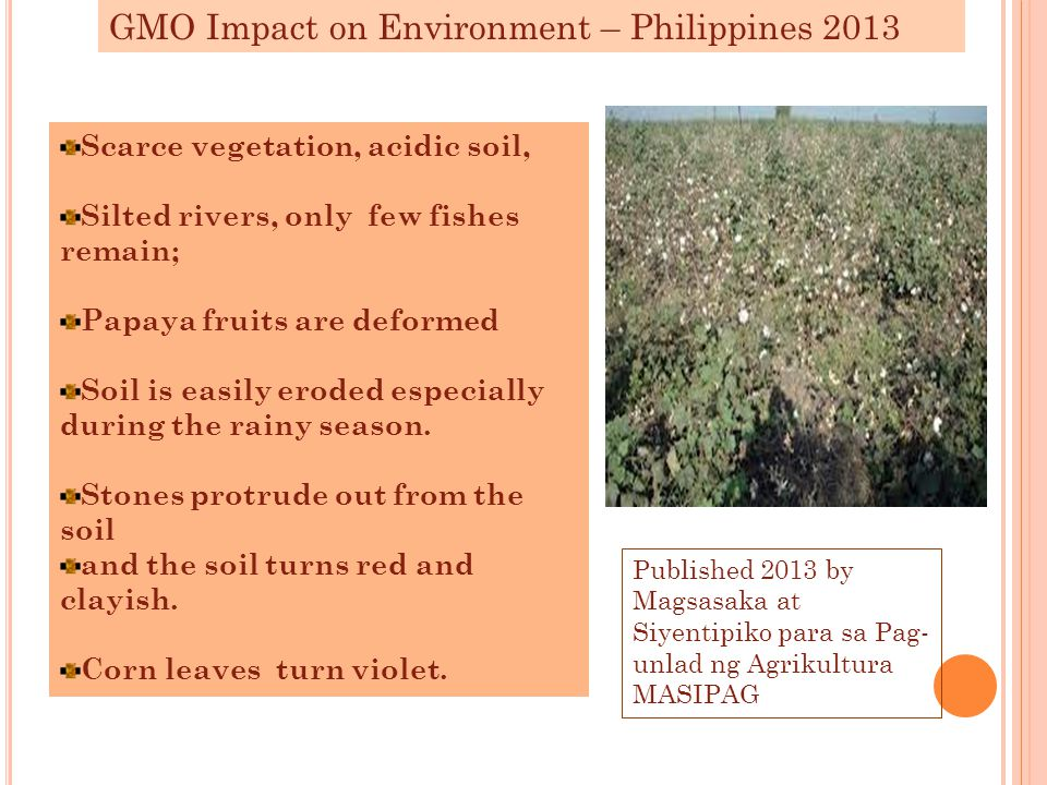 GMO Impact on Environment – Philippines 2013