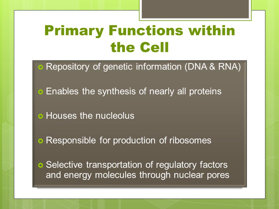 Primary Functions within the Cell