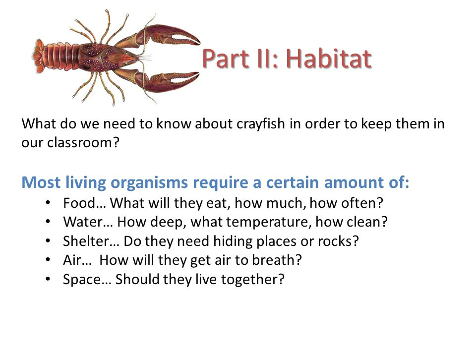 Part II: Habitat Most living organisms require a certain amount of: