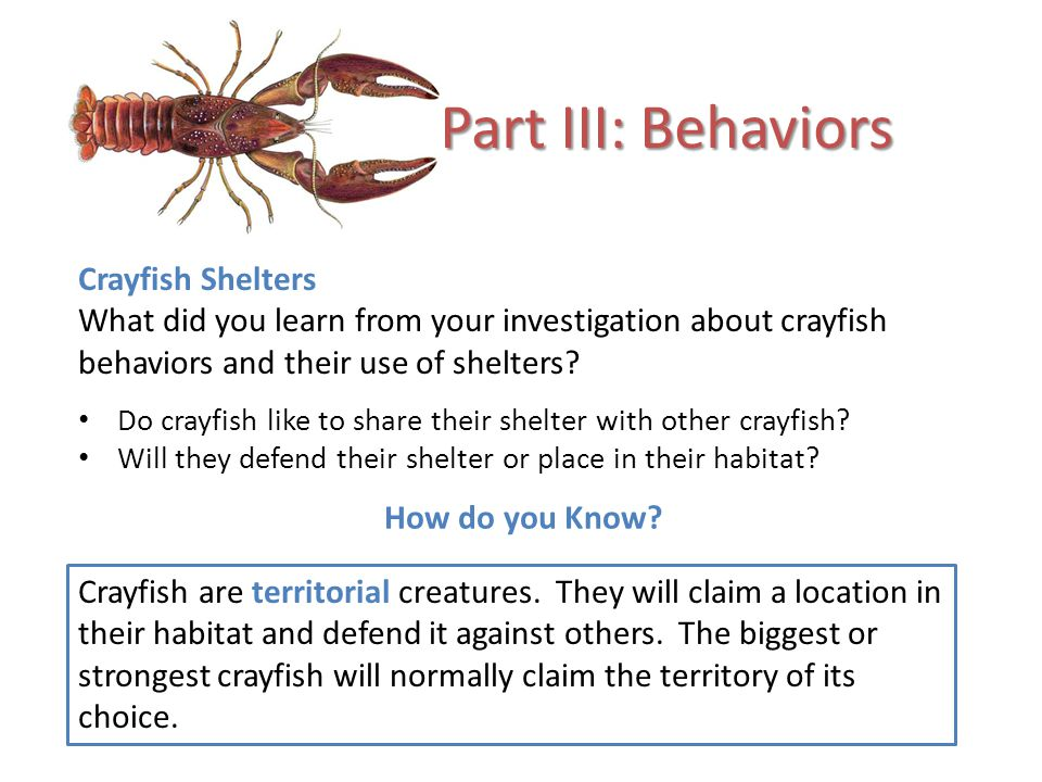 Part III: Behaviors Crayfish Shelters