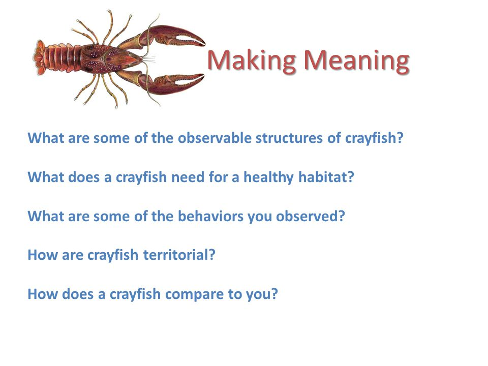 Making Meaning What are some of the observable structures of crayfish