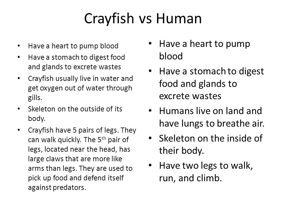 Crayfish vs Human Have a heart to pump blood