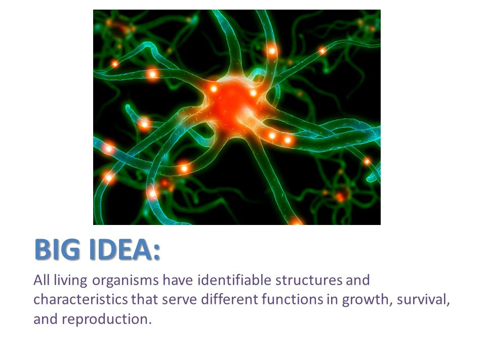 Big Idea: All living organisms have identifiable structures and characteristics that serve different functions in growth, survival, and reproduction.