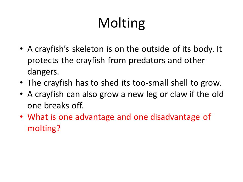 Molting A crayfish's skeleton is on the outside of its body. It protects the crayfish from predators and other dangers.