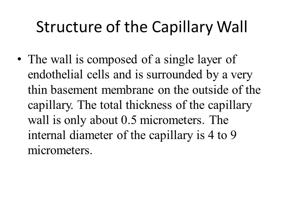 Structure of the Capillary Wall