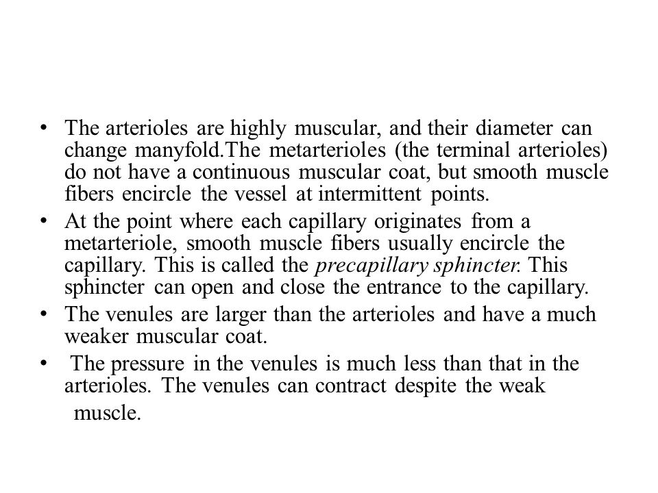 The arterioles are highly muscular, and their diameter can change manyfold.The metarterioles (the terminal arterioles) do not have a continuous muscular coat, but smooth muscle fibers encircle the vessel at intermittent points.