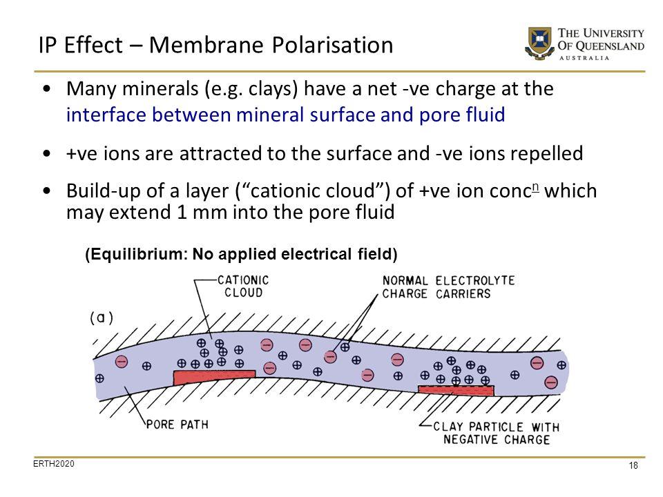 IP Effect – Membrane Polarisation