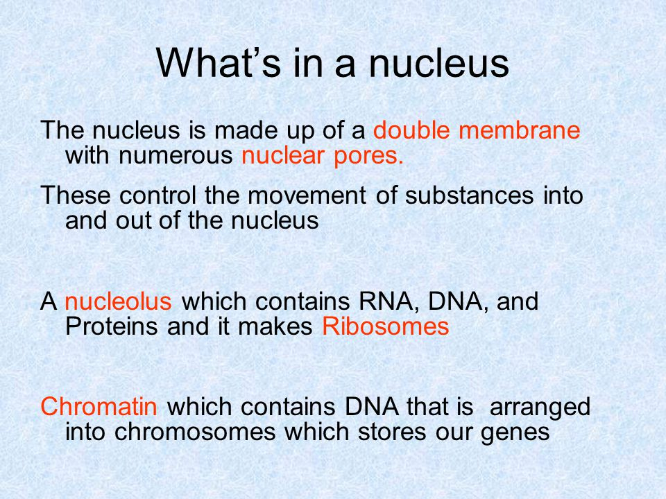 What's in a nucleus The nucleus is made up of a double membrane with numerous nuclear pores.