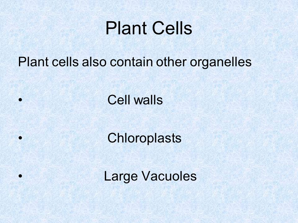 Plant Cells Plant cells also contain other organelles Cell walls