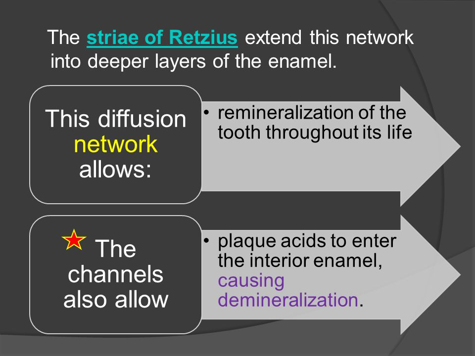 The striae of Retzius extend this network into deeper layers of the enamel.