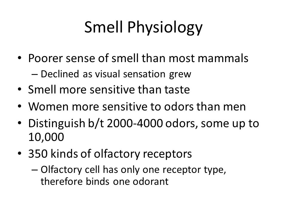 Smell Physiology Poorer sense of smell than most mammals