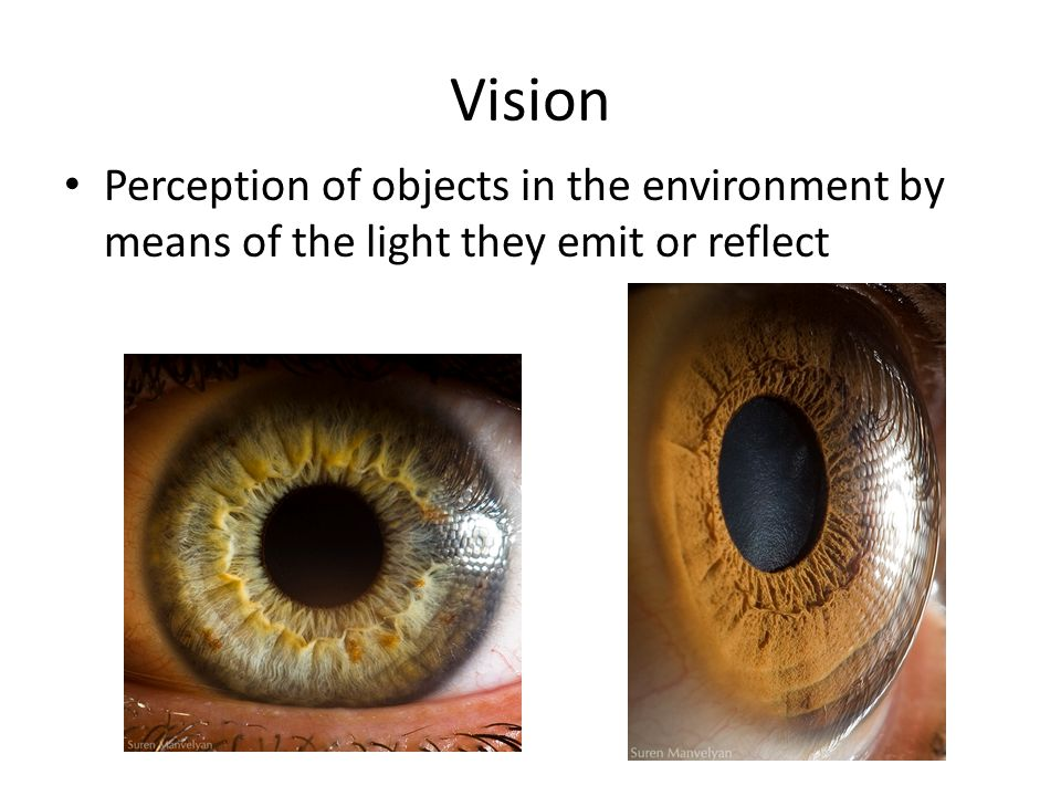 Vision Perception of objects in the environment by means of the light they emit or reflect