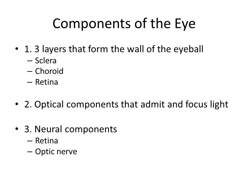 Components of the Eye 1. 3 layers that form the wall of the eyeball