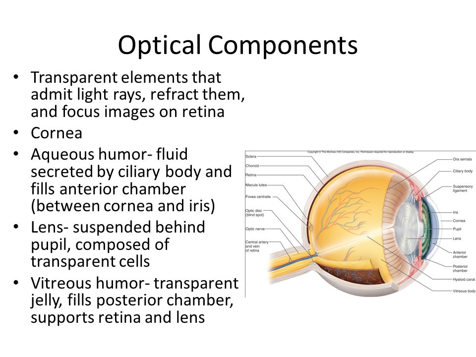 Optical Components Transparent elements that admit light rays, refract them, and focus images on retina.
