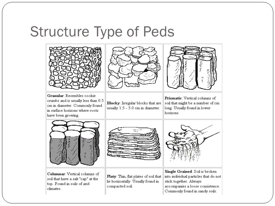 Structure Type of Peds