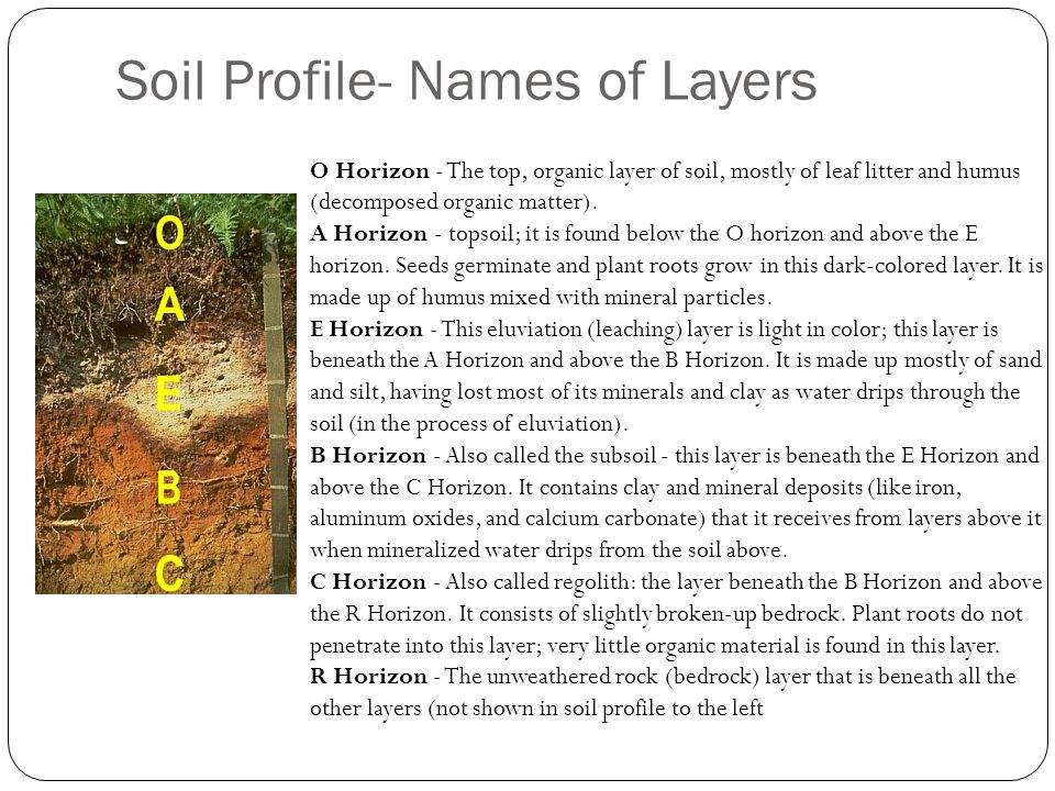 Soil Profile- Names of Layers