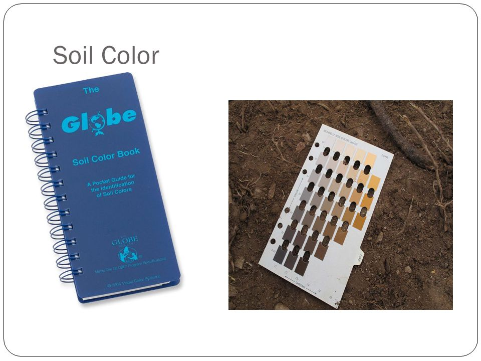 Forensics of soil mrs ashley ppt download for Soil yellow color