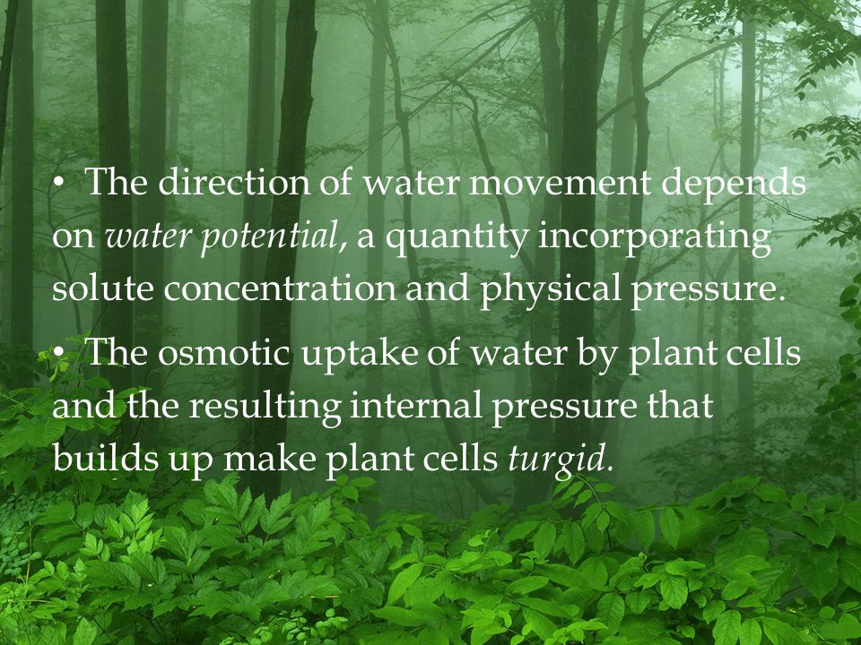 The direction of water movement depends on water potential, a quantity incorporating solute concentration and physical pressure.