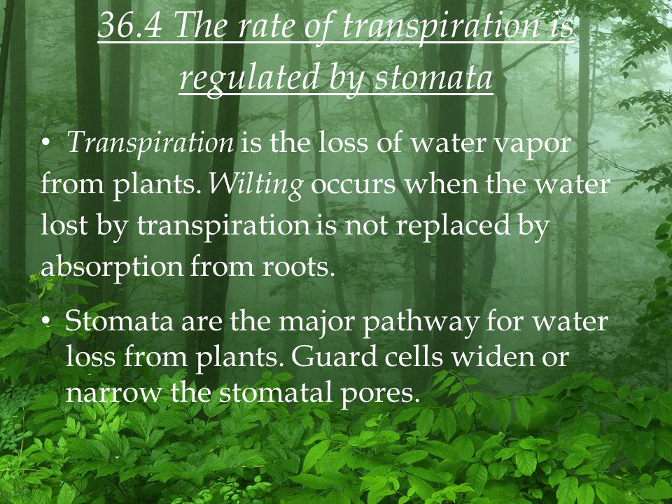 36.4 The rate of transpiration is regulated by stomata