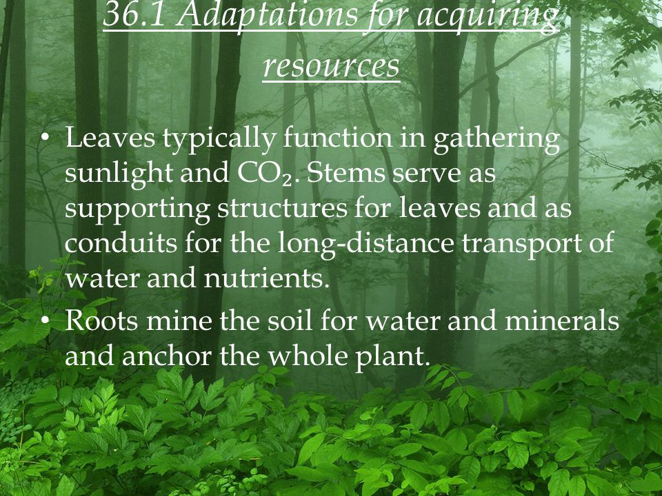 36.1 Adaptations for acquiring resources