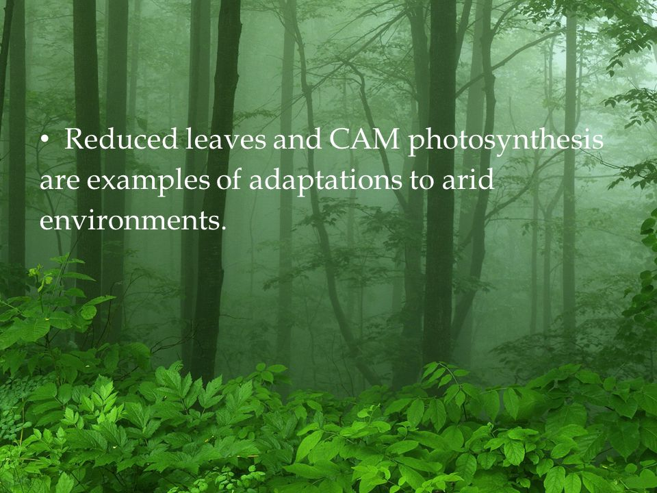 Reduced leaves and CAM photosynthesis are examples of adaptations to arid environments.