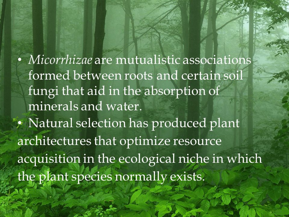 Micorrhizae are mutualistic associations formed between roots and certain soil fungi that aid in the absorption of minerals and water.