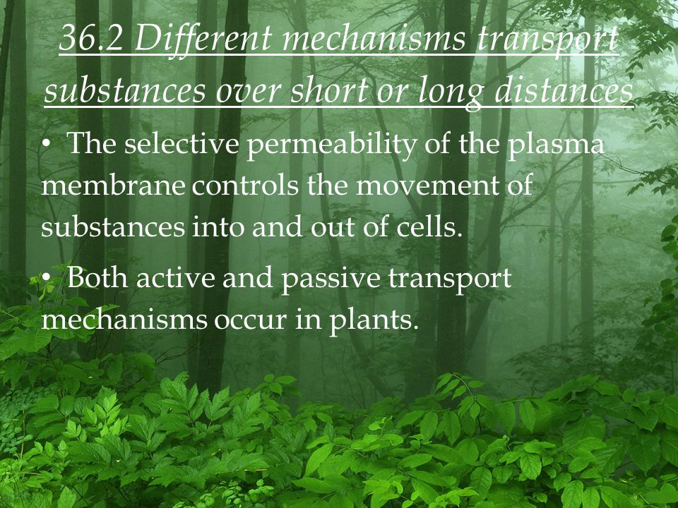 36.2 Different mechanisms transport substances over short or long distances