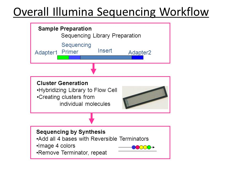 Overall Illumina Sequencing Workflow