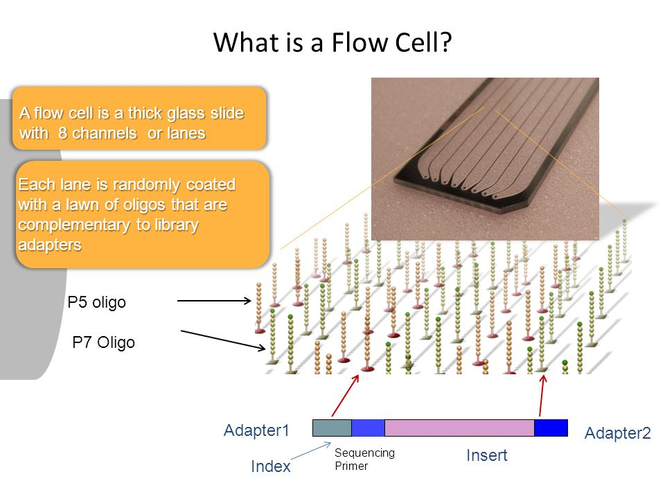 What is a Flow Cell A flow cell is a thick glass slide with 8 channels or lanes.