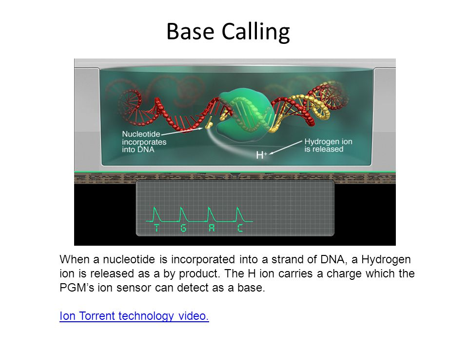 Base Calling