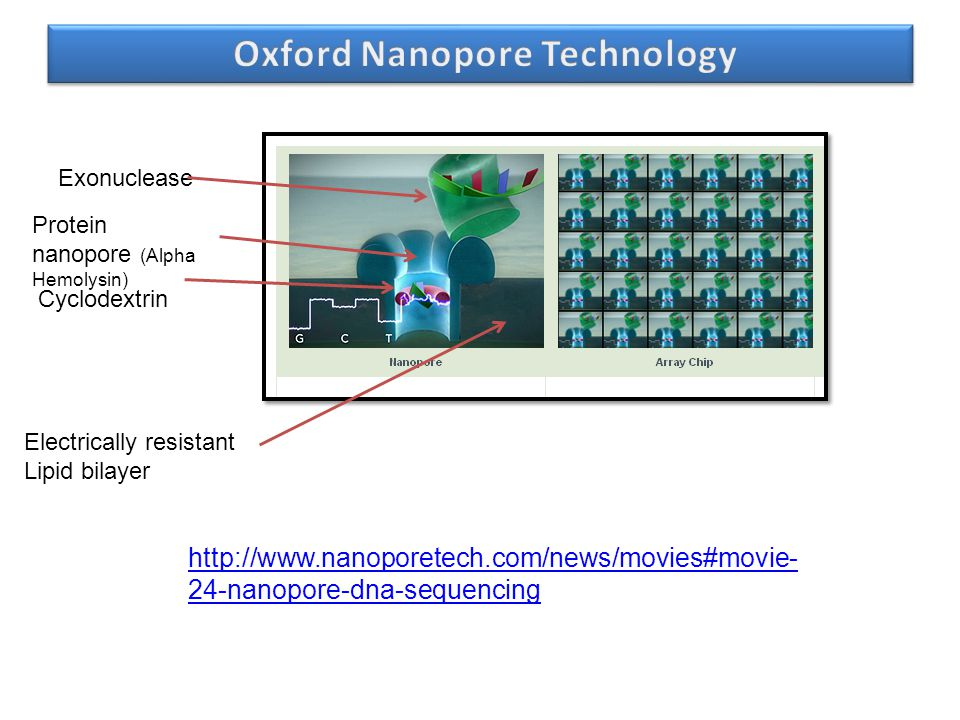 Oxford Nanopore Technology