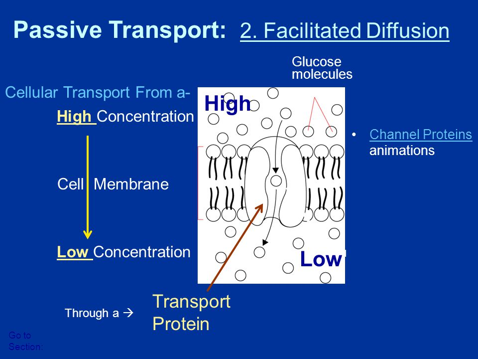 Passive Transport: 2. Facilitated Diffusion