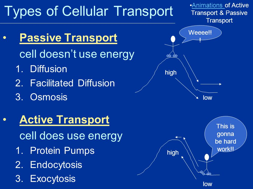 Types of Cellular Transport