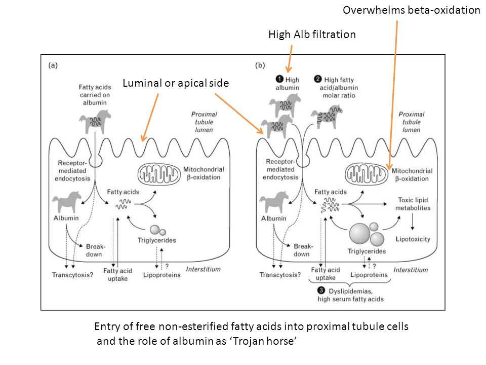 Overwhelms beta-oxidation