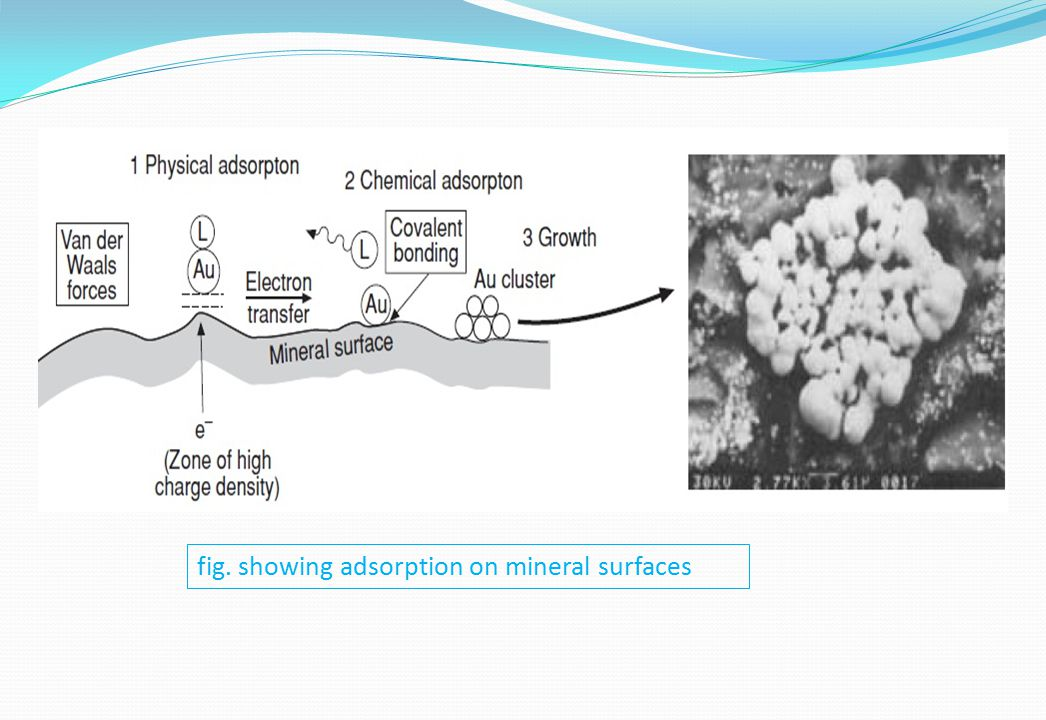 fig. showing adsorption on mineral surfaces