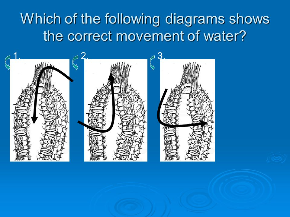 Which of the following diagrams shows the correct movement of water