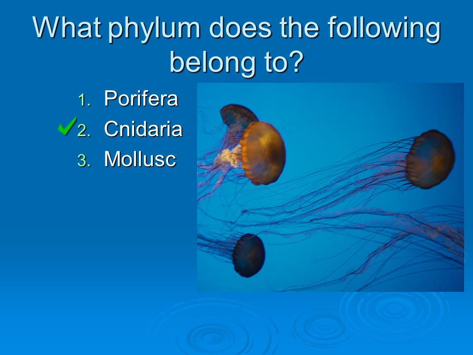 What phylum does the following belong to