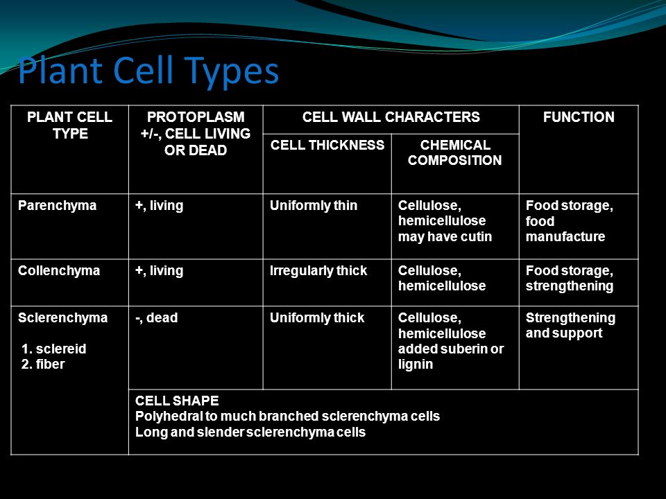 Plant Cell Types PLANT CELL TYPE PROTOPLASM +/-, CELL LIVING OR DEAD